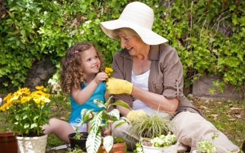 многолетники,многолетние растения,цветы,посадка,цветник,деление