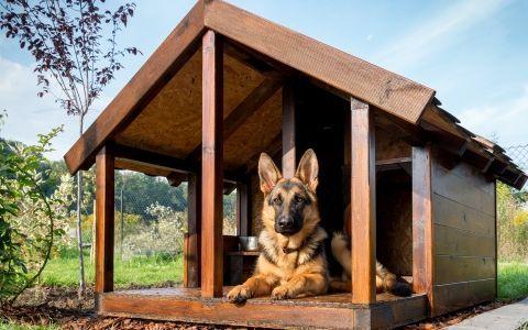 Дом для друга. Какой уход нужен собачей будке и вольеру