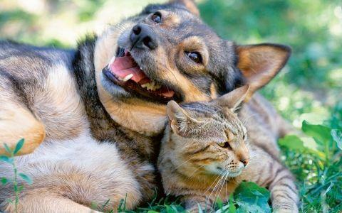 Домашние животные на даче. Угрозы и опасности