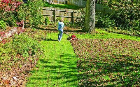 газон,уход за газоном,стрижка газона,трава,травы,уход зимой,подготовка к зиме