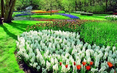 Что такое голландский садик? Какие растения в нем обязательны?