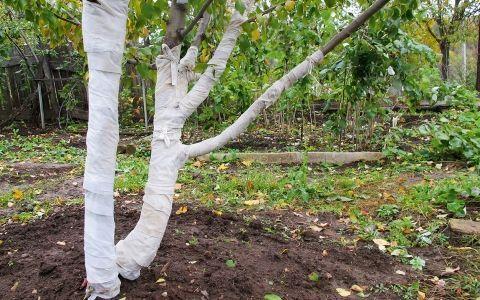 Основные работы по подготовке сада к зиме