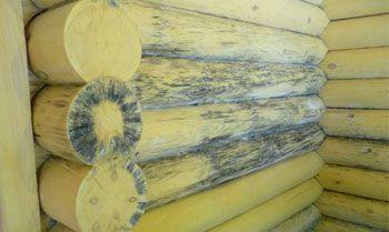 Плесень на стенах в доме из дерева: причины и борьба с плесенью