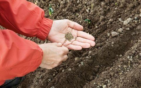 Подзимний посев растений
