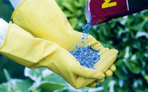 Правила удобрения садовых растений