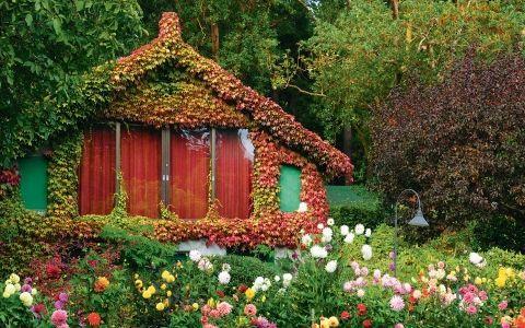 Садовые растения с декоративным осенним нарядом
