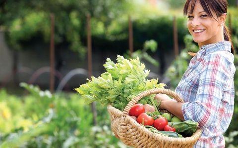 Сбор урожая и окулировка. Календарь садовых работ на август