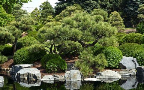 Топ-12 хвойных растений для выращивания в саду