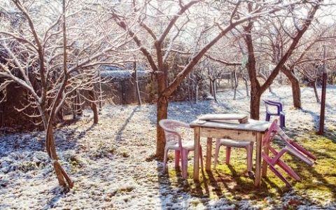 Что нужно делать в саду зимой