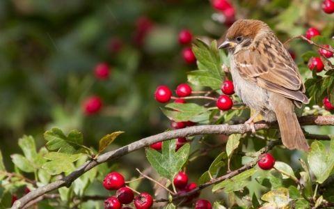 Топ-6 растений для привлечения птиц в сад