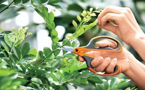 Выбираем инструменты для обрезки деревьев и кустарников