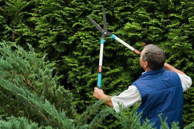Садовые ножницы тоже могут иметь телескопические рукоятки, которые помогут стричь высокие изгороди